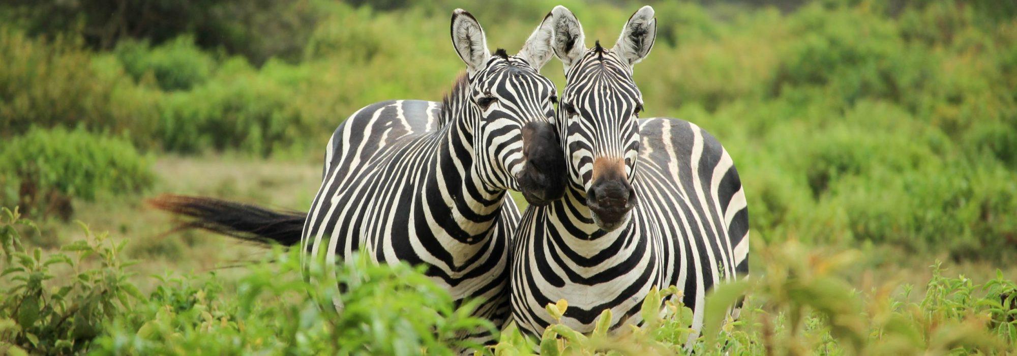 kenyalisa-h-169936-unsplash